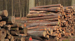 Stack of cut timber Stock Footage