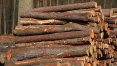 Stack of wood logs - stock footage