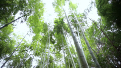 Bamboo forest sunlight canopy harvest travel Arashiyama Kyoto Japan - stock footage