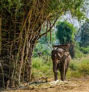 Elephants in the tropical forest of Thailand Stock Photos