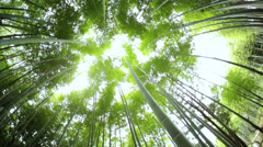 Bamboo forest environment sunlight canopy harvest Kyoto Japan Stock Footage