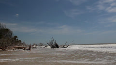 Dead uprooted trees on beach Stock Footage