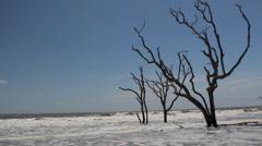 Trio dead trees rough ocean bone yard Stock Footage