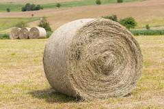 Hay rolls in a field against forest Stock Photos