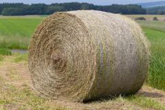hay rolls in a field against forest - stock photo
