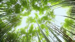 Bamboo rainforest environment sunlight harvest tree Arashiyama Kyoto - stock footage