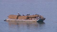 Boat full of birds Stock Footage