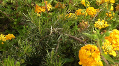 Moving over the small orange flowers Stock Footage