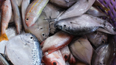 Many kind of fishes from andaman sea Stock Footage