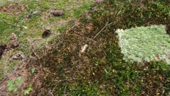 Spot in mossy ground in woods after metal detection, pan Stock Footage