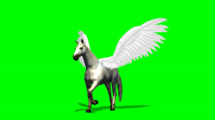 Pegasus Horse walks - green screen Stock Footage