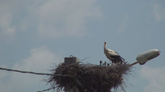 Family of white storks, A white stork with three stork baby's in nest Stock Footage
