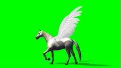 Pegasus Horse walks - green screen - stock footage