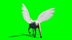 Pegasus Horse walks - green screen Stock Footage