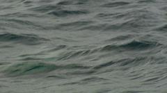 A Galápagos fur seal swimming the sea, Stock Footage