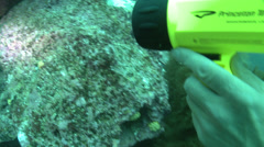 Underwater shot of a Yellowtailed Surgeonfish and several smaller tropical fish Stock Footage