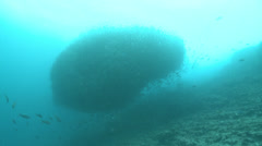 Underwater shots of a very large school of tropical fish. Stock Footage