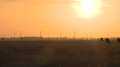 EARLY MORNING SUNRISE ON COW PASTURE GRAZING WIDE PAN OF FIELD HD HIGH DEFINITON Stock Footage