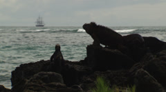 Two Marine Iguanas sitting on rocks near the shore. In the distance a ship. Stock Footage