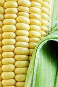 maize cob detail with green leaves - stock photo