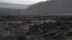 Stock Video Footage of Volcanic island of the Galapagos with rocks and a small cactus.