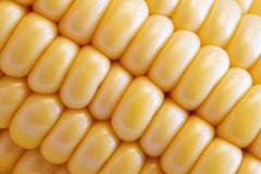 Corn Texture Background Stock Photos