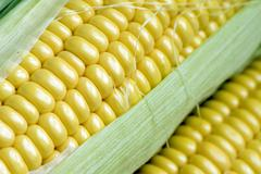 Maize cob detail with green leaves Stock Photos