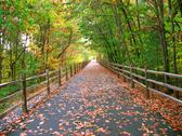 Stock Photo of long wooded trail