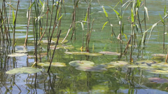 MREZ 03 Peaceful lake pond surface with water plants 2 Stock Footage