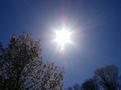 Spring Radiance - stock photo