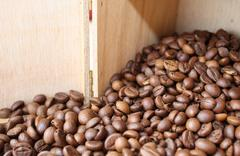 Beans of coffee Stock Illustration