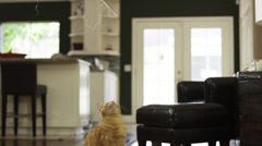 Orange Striped Cat Swipes at String in 4K Stock Footage