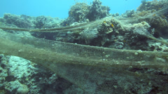 Hazard to marine life, old fishing net caught on coral reef underwater Stock Footage