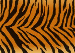 Texture for a background - a fluffy skin of a tiger - stock illustration