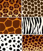 Animals skins  textures Stock Illustration