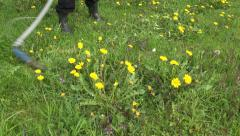 Mowing with scythe  spring grass in  garden Stock Footage