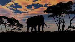 elephant sillouette on sunset background - stock footage