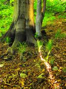 Heavy tangled roots of trees in park, brown or gray bark on trunk, fresh  grass - stock photo