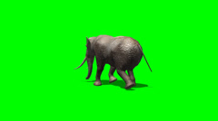 Elephant ambles past - green screen Stock Footage
