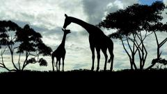 giraffe with a young sillouette on sunset background - stock footage