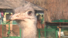 Ostrich turning his head and blinks - stock footage