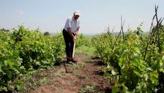 Farmer removes weeds from field, man working, hoeing in vineyard,organic farming - stock footage