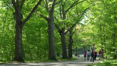 Beautiful Walking Trail in Woods Timelapse Stock Footage