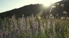 Beautiful plants meadow illuminated by sunset Stock Footage