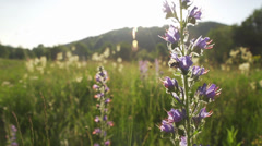 Bees collect pollen from spring meadow at sunset Stock Footage