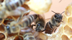 Bees inside hive Stock Footage