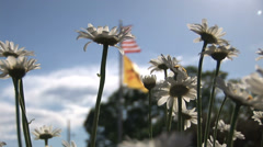 New Mexico Daisies with Flags Stock Footage