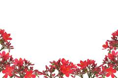 red floral design border - stock photo