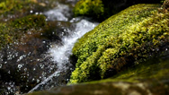 Stock Video Footage of Creek And Rocks Covered With Moss.