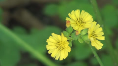 Small Yellow Flowers In The Wind Stock Footage